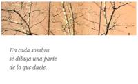 Casi haikus