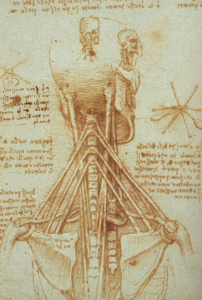 4 Anatomía del cuello por Leonardo da Vinci, c. 1515