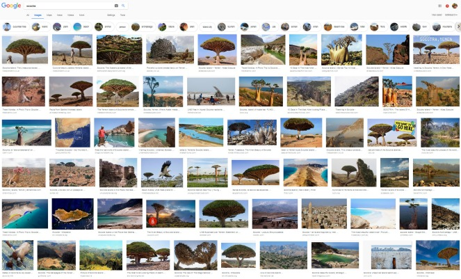 4 Screenshot_2018-10-05 socotra - Google Search