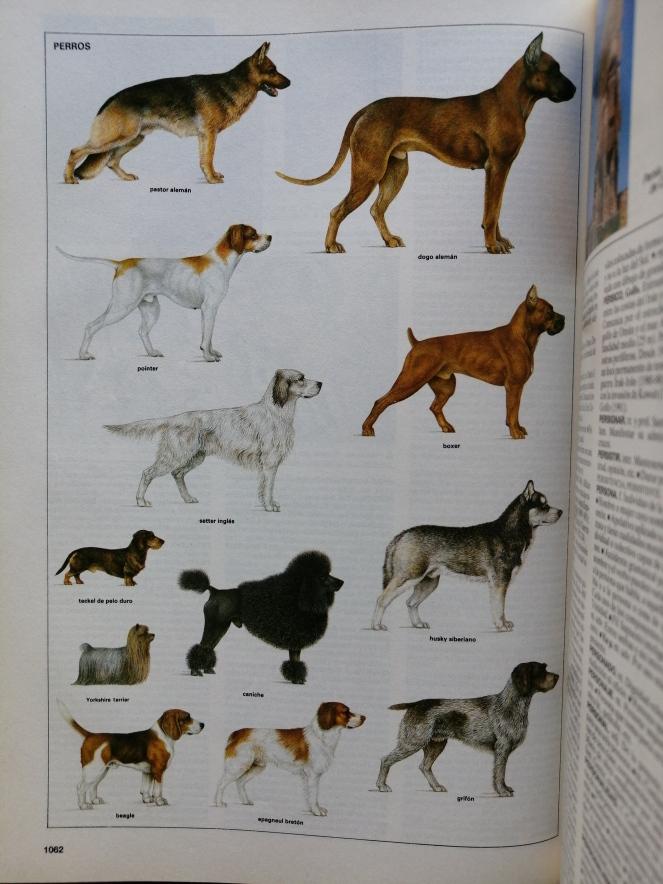 5 Perros